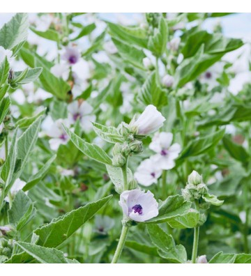 Medicinal Herbs for Winter Wellbeing