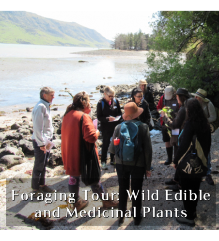 Foraging Tour: Wild Edible and Medicinal Plants