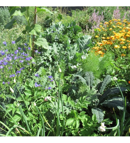 Organic Gardening with the Soil Food Web