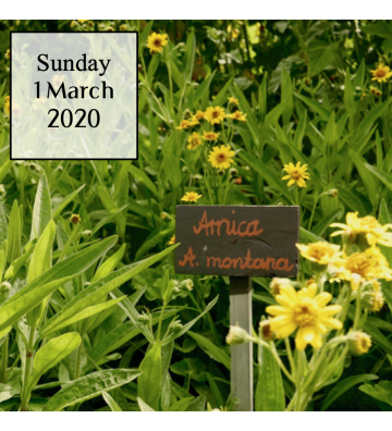 Herb Farm OPEN DAY